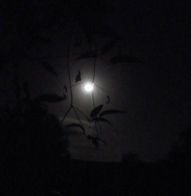 Super moon, 3 DSCF9379